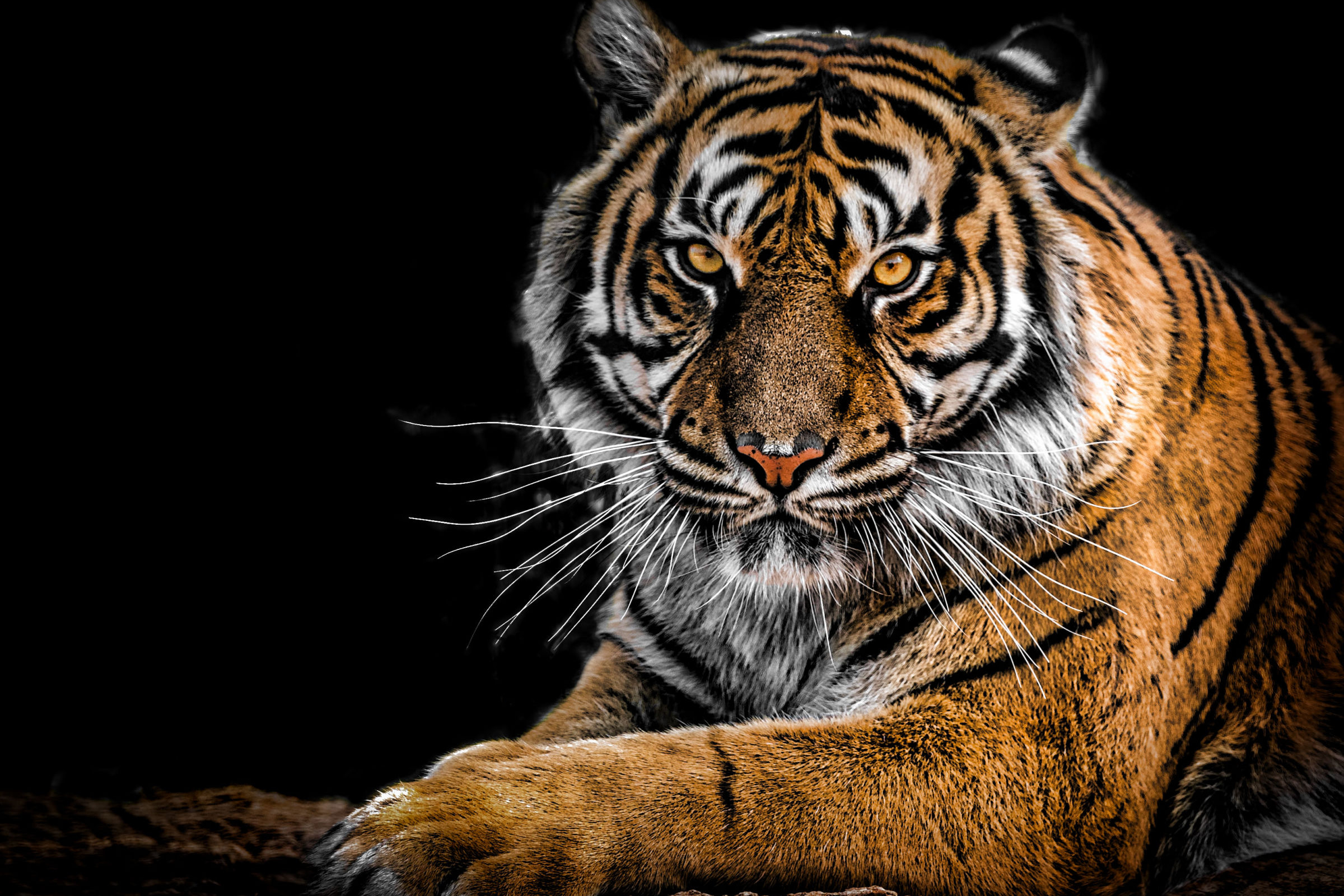 Introducing Our Latest Practice Area – Class Action Tiger Law